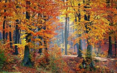 Höstens handledning